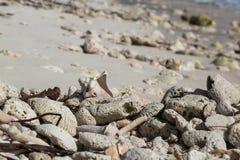 Old shell on sandy coral beach, Saona Royalty Free Stock Photos