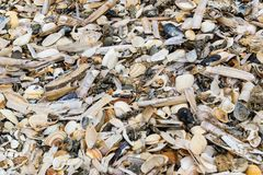 Old shells, mussels and clams on a sandy sea beach. stock photo