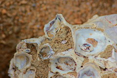 Old shells Royalty Free Stock Images
