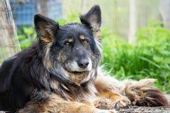 Old shepherd. Portrait of old long hair sheperd Royalty Free Stock Photos