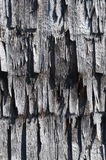 Old shingles. Shingles. Texture of old wooden plates. Vertical Stock Photos