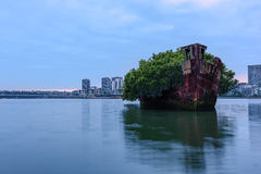 Old Shipwrecks of Homebush Bay in Sydney Australia. 102 year old Shipwrecks of Homebush Bay in Sydney Australia became A Floating Forest Royalty Free Stock Images