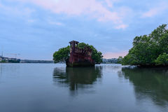 Old Shipwrecks of Homebush Bay in Sydney Australia. 102 year old Shipwrecks of Homebush Bay in Sydney Australia became A Floating Forest Royalty Free Stock Image