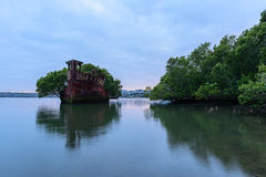 Old Shipwrecks of Homebush Bay in Sydney Australia. 102 year old Shipwrecks of Homebush Bay in Sydney Australia became A Floating Forest Stock Photos