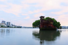 Old Shipwrecks of Homebush Bay in Sydney Australia. 102 year old Shipwrecks of Homebush Bay in Sydney Australia became A Floating Forest Royalty Free Stock Photography