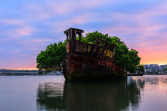Old Shipwrecks of Homebush Bay in Sydney Australia. 102 year old Shipwrecks of Homebush Bay in Sydney Australia became A Floating Forest Stock Image