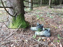 Old shoe in forest Royalty Free Stock Image