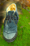 Old shoe - in the grass green moss. Royalty Free Stock Photography