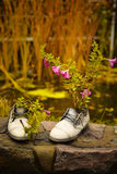 Flower growing in old shoes, cheerful gardener. Another life old shoe, cheerful flower bed Stock Image