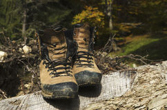 Old shoes on a cut tree Stock Photography