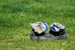 Old shoes lying in a grass. Old shoes with socks lying in a grass Royalty Free Stock Photos