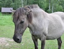 Old sick horse Stock Photo