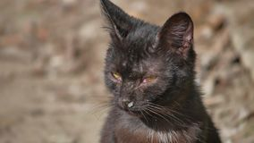 Old sick runny snot runny nose homeless cat pet outdoor Royalty Free Stock Image