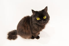 Old sitting black cat Royalty Free Stock Images