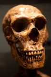 Old Skull Stock Photo