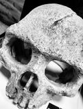 Old skull. Aged skeleton in black and white Royalty Free Stock Image