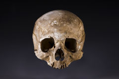 Old skull close-up Royalty Free Stock Photo