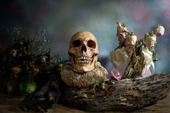 Old Skull on Decayed wood and Wither pumpkin, Still Life Stock Photo