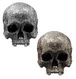 Old Skull. Gravure effect in Photoshop Royalty Free Stock Images