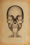 Old skull illustration Royalty Free Stock Photography