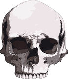 Old skull Royalty Free Stock Photos