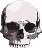 Old skull Royalty Free Stock Photos