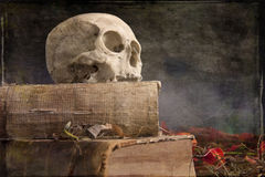 Old skull on old book Royalty Free Stock Image