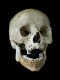 Old skull. Stock Photography