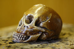 Old skull plastic art. Old artistic sculpture of skull royalty free stock image