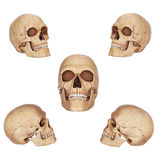 Old skulls Stock Photography