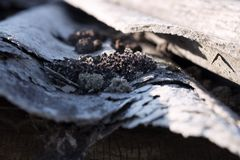 Old slate roof close up with trash and plant stock image