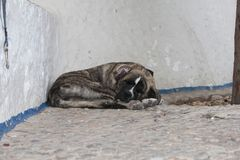 Old sleeping dog on the street Royalty Free Stock Images