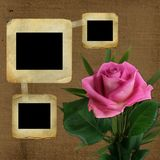 Old slides for photo with pink rose Royalty Free Stock Photo