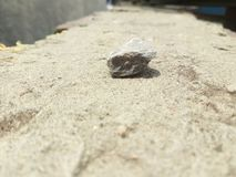 A old Small Stone floor stock photography
