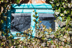 Old small wooden window surrounded by ivy Royalty Free Stock Images