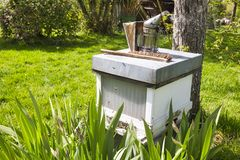 Old Smoker standing on the hive. in the garden A bee smoker is a device used in beekeeping to calm honey bees. Old Smoker standing on the hive. A bee smoker is a stock images