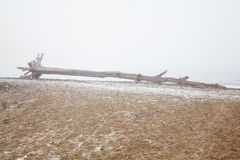 Old snag on a deserted foggy beach Royalty Free Stock Photo