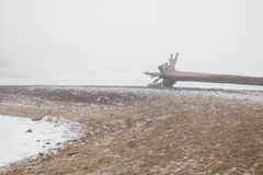 Old snag on a deserted winter beach Stock Photo