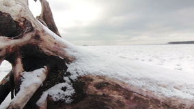 Old snag on the shore of a frozen lake stock video footage