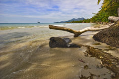 Old snag and tide of tropical beach Stock Photography