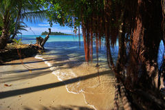 Old snag and tide of tropical beach Stock Photos