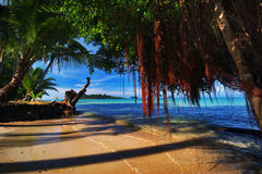 Old snag and tide of tropical beach Stock Photo
