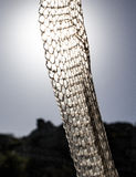 Old snake skin against the light Stock Photos