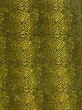 Old snake skin Royalty Free Stock Image