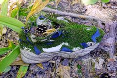 Old sneaker overgrown with green moss is on the grass and dry leaves Royalty Free Stock Image