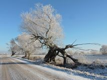 White winter trees near road , Lithuania Royalty Free Stock Photo