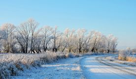White winter trees near road , Lithuania Stock Image