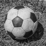 Old Soccer ball on grass Stock Image