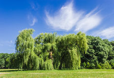 Old solitary willow in the park Royalty Free Stock Photos