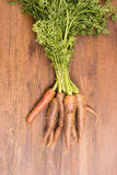 Old sort of carrots Stock Photo